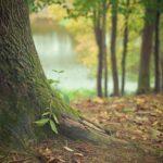 Prześliczny i {zadbany zieleniec to nie lada wyzwanie, zwłaszcza jak jego konserwacją zajmujemy się sami.